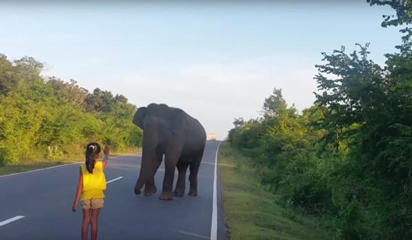 niña deteniendo elefante