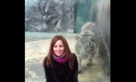 Mujer provoca a un tigre