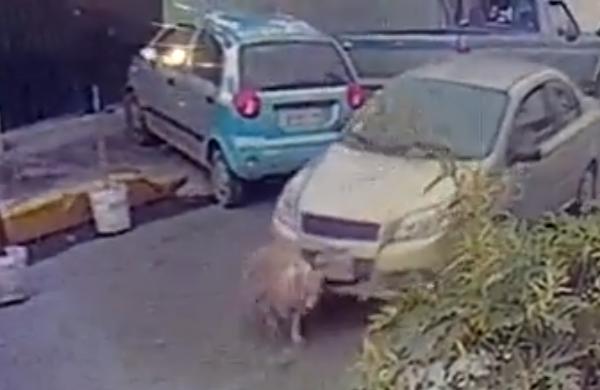 Hombre atropella intencionalmente a un perro