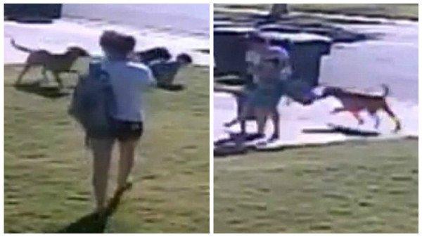 Madre salva a su pequeño del ataque de dos perros