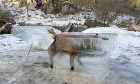 animal congelado