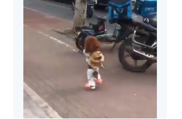 Maltratan a perros para que caminen en dos patas