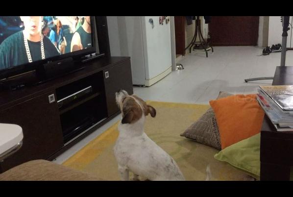 Despacito perro