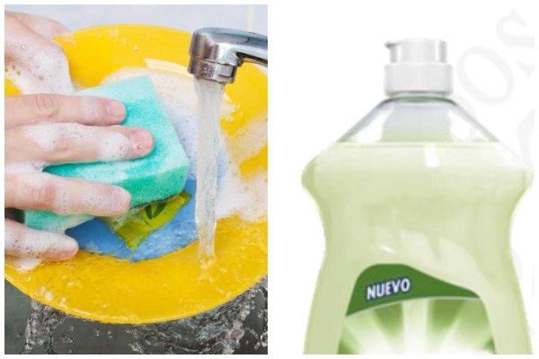 lavatrastes bacteria