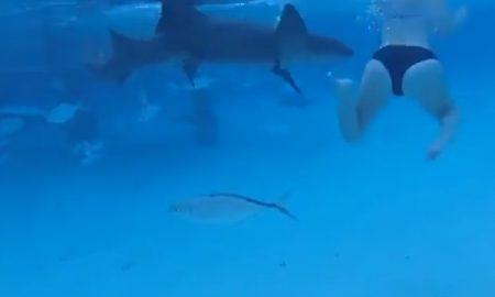 tiburón ataca a una mujer