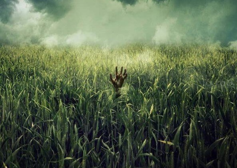en la hierba alta netflix