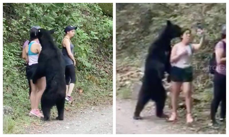 oso-negro-selfie-monterrey